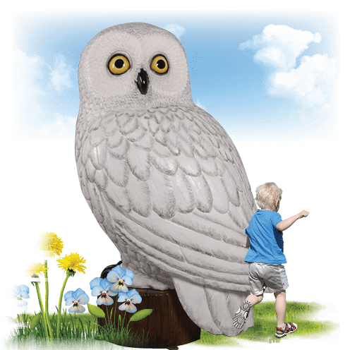 Larger Than Life size Birds Snowy Female Owl Image