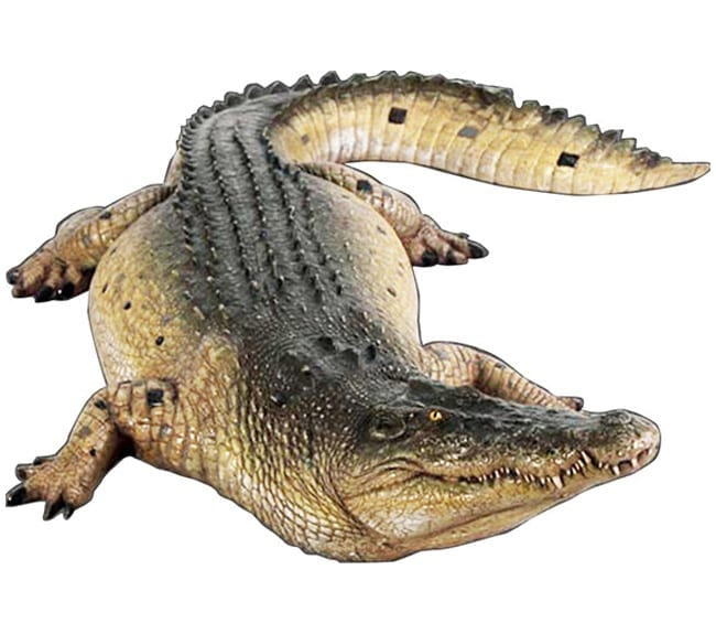 Life size Saltwater Crocodile ft Mouth Closed