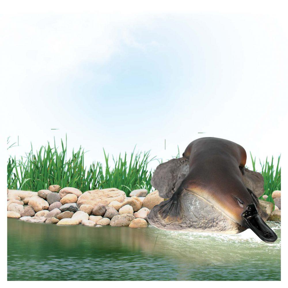 Platypus on rock-small