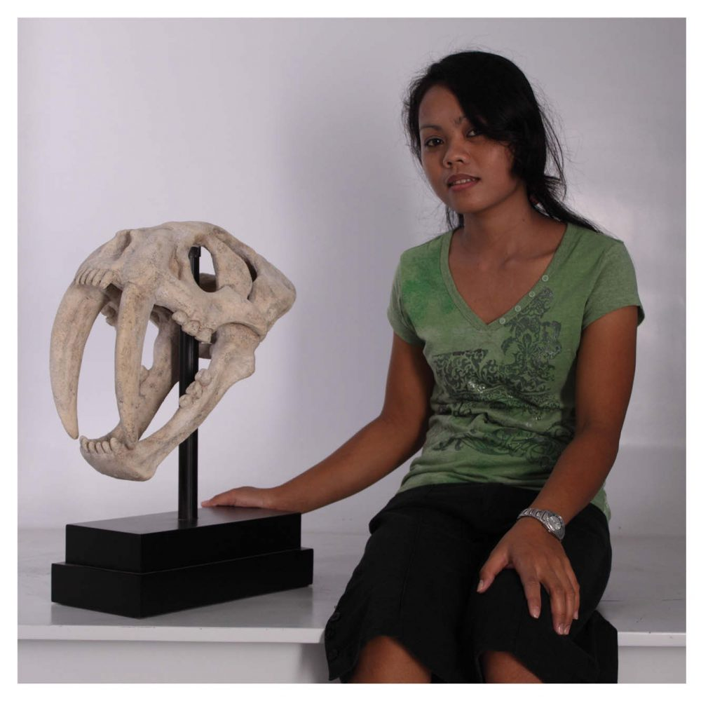 Sabre tooth tiger skull on base plate - museum replica