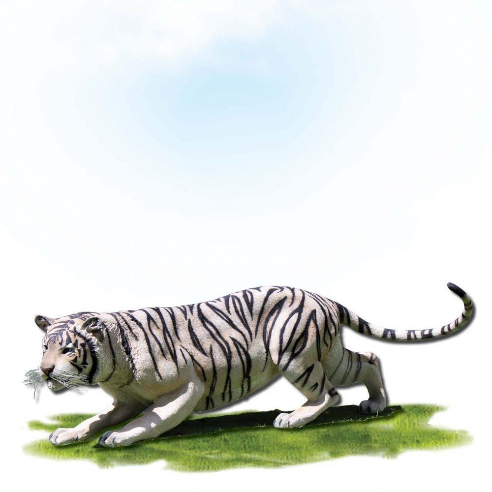 Siberian tiger crouching- Museum standard