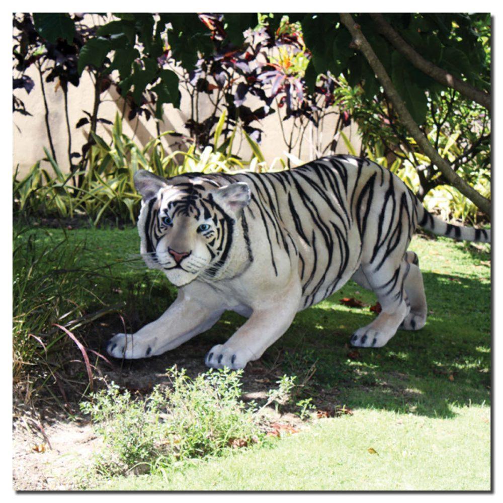Siberian tiger crouching