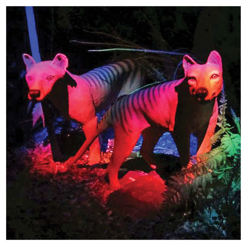 Mammals Big Cats Thylacine Tassie Tiger Black Light Exhibit Product Image V px px