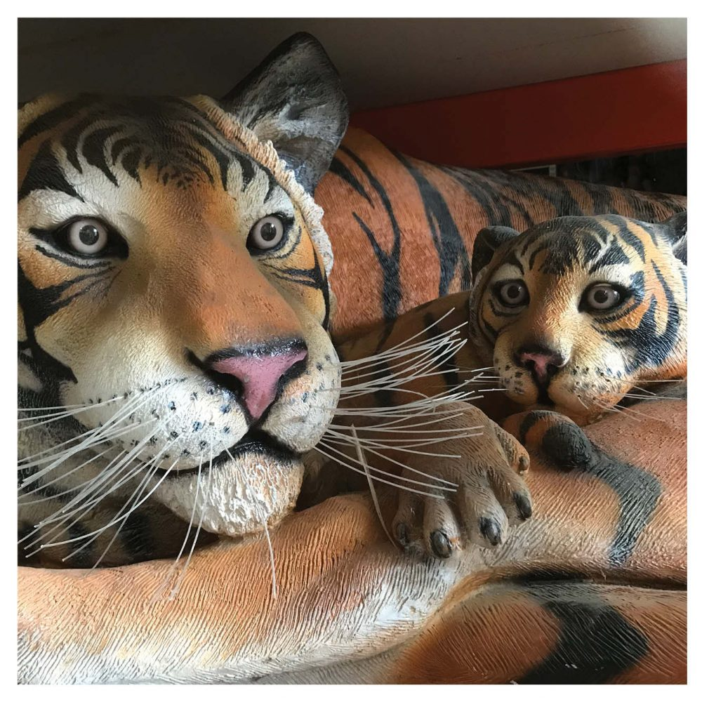 Bengal Tigress Resting With Cub. Tiger Statue- close up of face