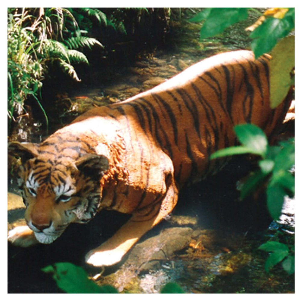 Bengal Tiger Crouching Statue