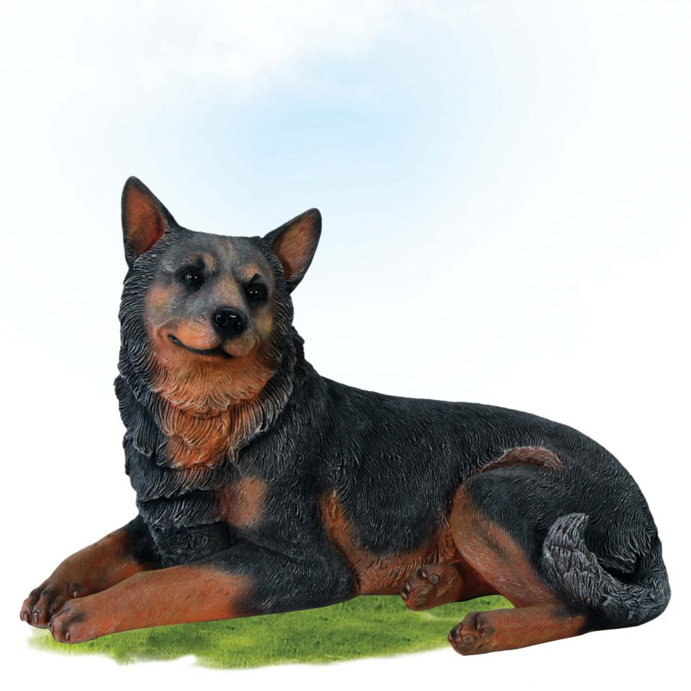 Mammals Domestic Pets Dogs Blue heeler dog lying Product Image V px px