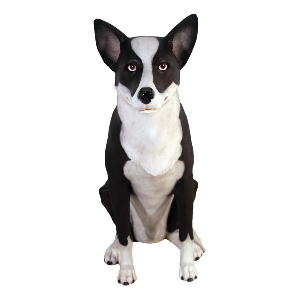 Mammals Domestic Pets Kelpie Dog sitting Front view Product Image V px px