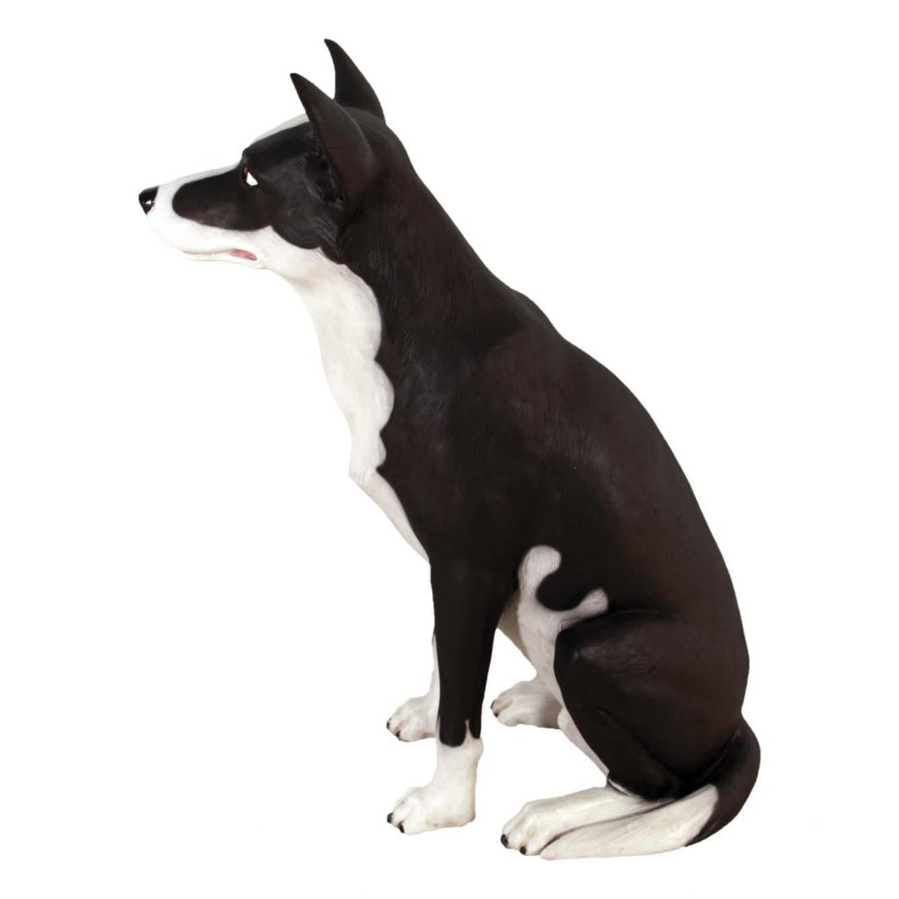 Mammals Domestic Pets Kelpie Dog sitting Side view Product Image V px px