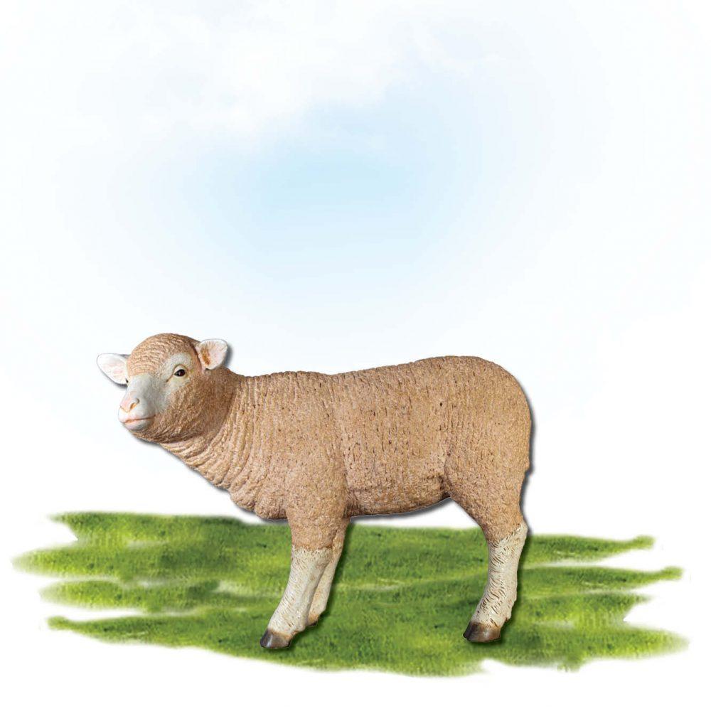 Mammals Farm animals Sheep Merino lamb  Standing Product Image V px px