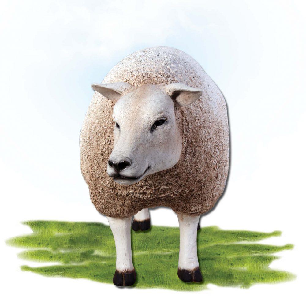 Mammals Farm animals Sheep Texlaar Ewe Head up White Product Image V px px