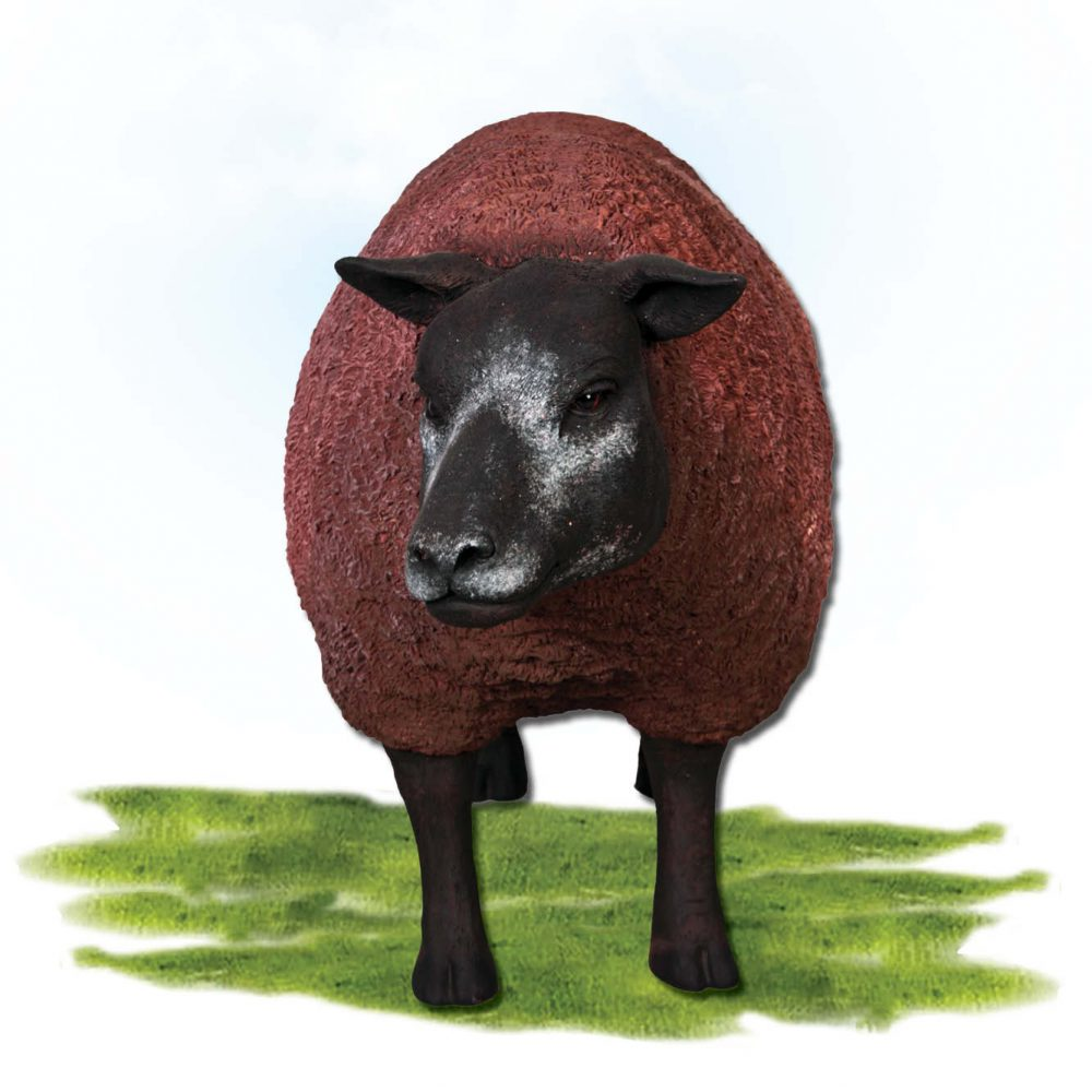 Mammals Farm animals Sheep Texlaar Ewe Head up brown Product Image V px px