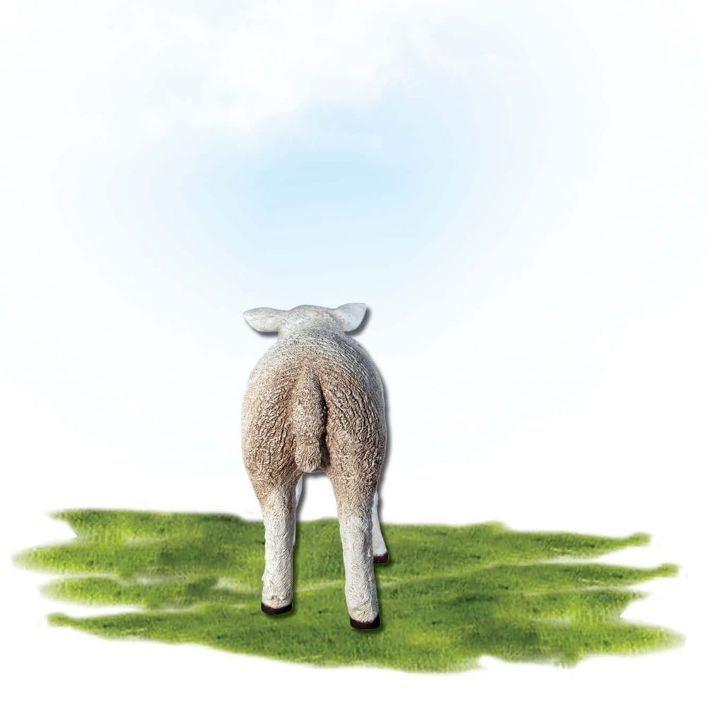 Mammals Farm animals Sheep Texlaar Lamb Resting White Product Image V px px