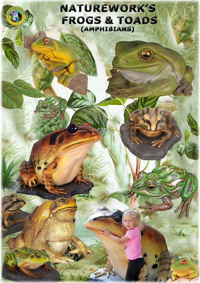 Amphibians - frogs and toads catalogue