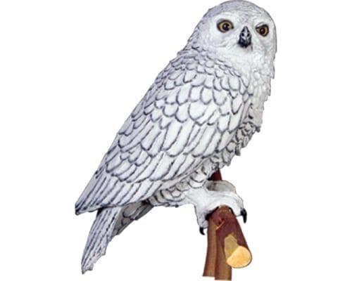 Owl Snowy Male
