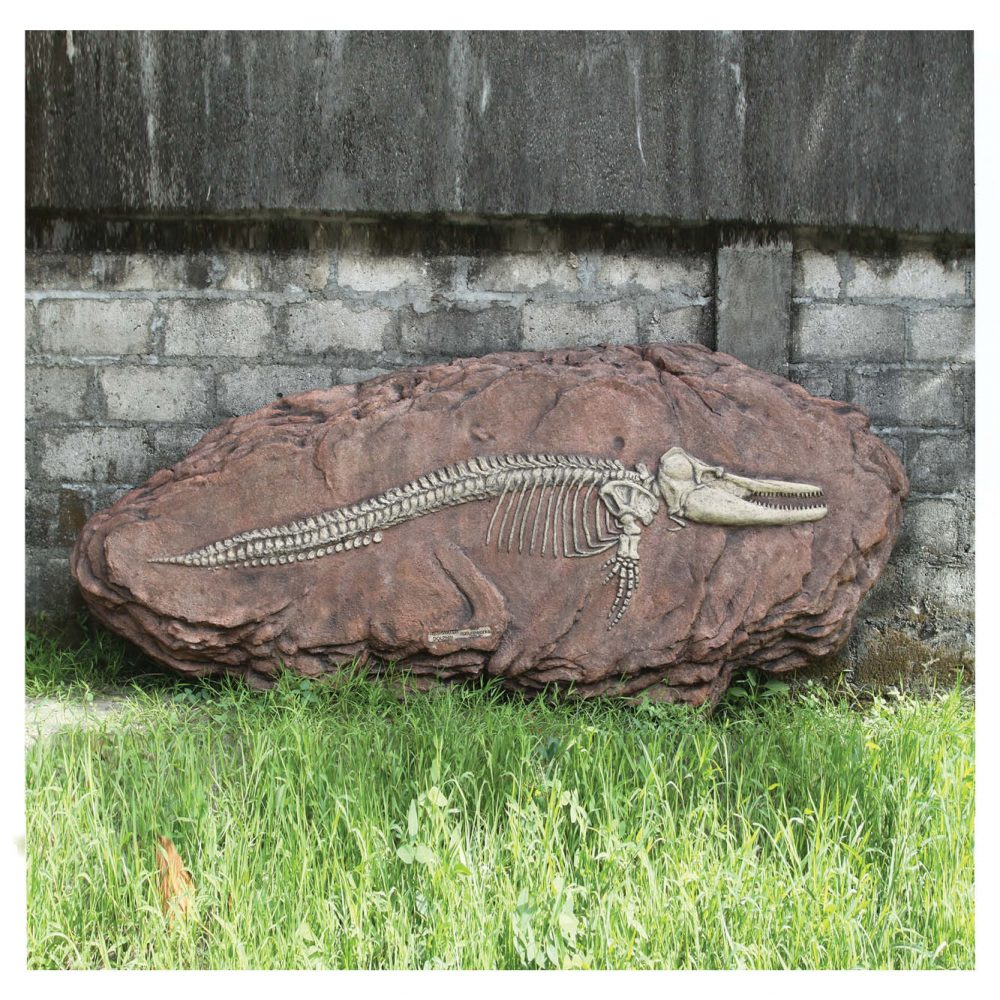 Prehistoric Dinosaur Fossil Digs Australian dolphin fossil dig Product Image V px px