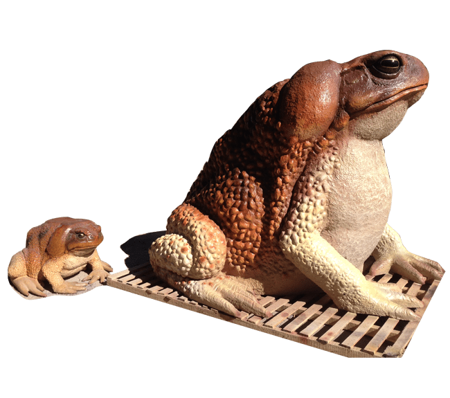 Product Image Website M Toad with Size Comparison