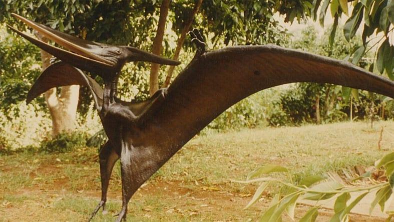 Pteranodon Dinosaur Standing m Wingspan Brown S