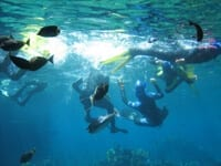Shark Bay Sea World With Divers