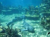 Shark Bay Sea World With Shark View