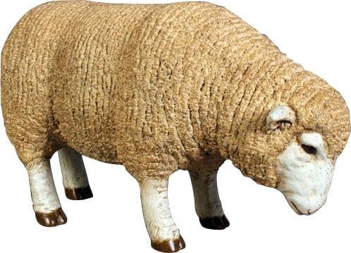Sheep Merino Ewe Head Down Small