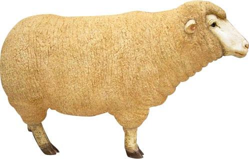 Sheep Merino Ewe Head Up Adult