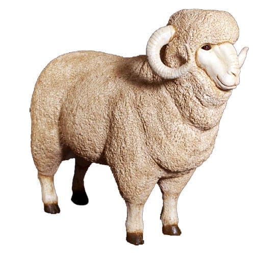Sheep Merino Ram Large