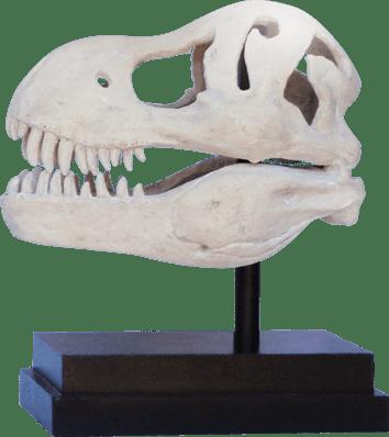T Rex Dinosaur Skull on Base