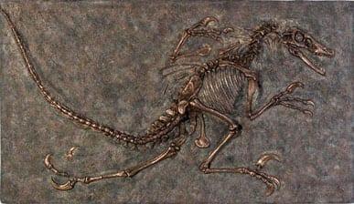Velociraptor Fossil Wall Frieze Natural VFWFN