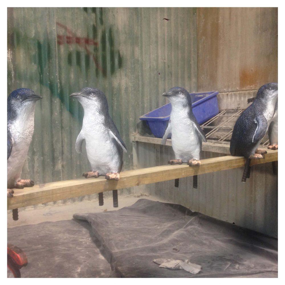 Penguin Set includes King penguin, Rockhopper penguin and Fairy Penguin.
