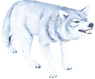 Wolf Artic White W