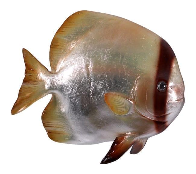 fibreglass fish batfish