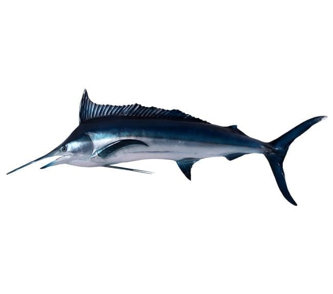 fibreglass fish black Marlin