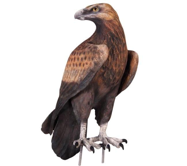 wedge tailed eagle statue
