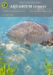 Aquarium catalogue