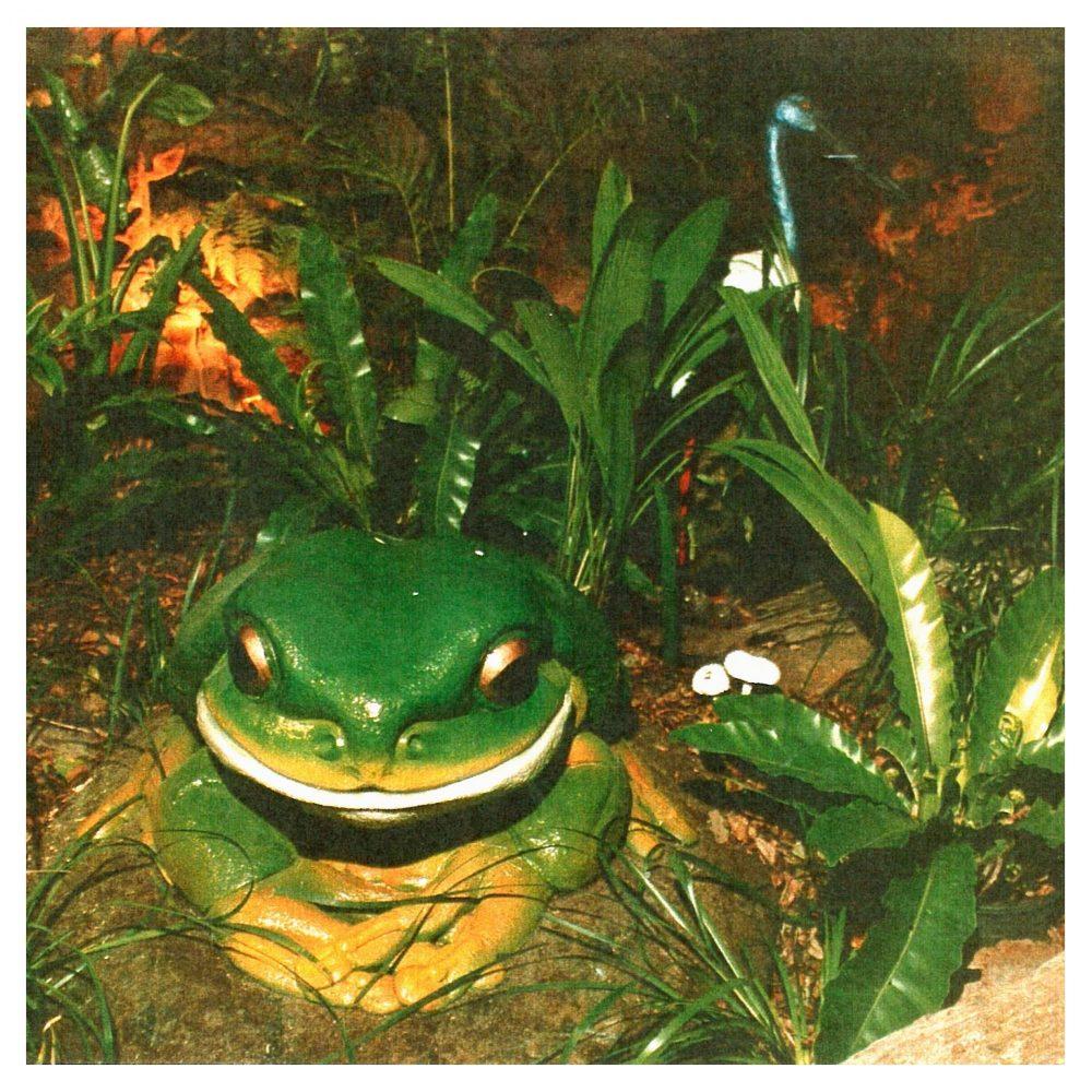 Green Tree Frog - Giant