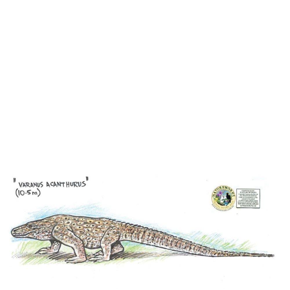 Animals Reptiles Lizards  Nyinkka Nyunyu Lizard Concept Product Image V px px