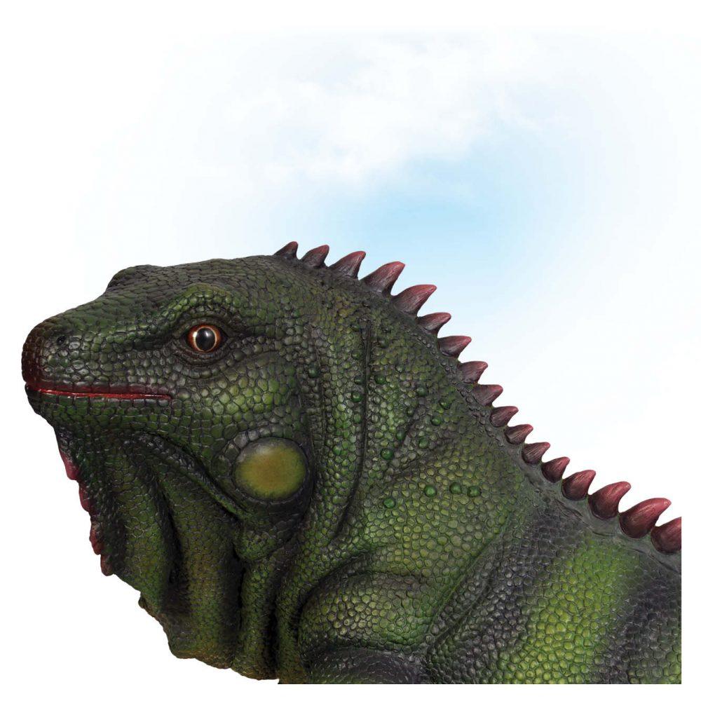 Animals Reptiles Lizards Iguana Large Product Image V px px
