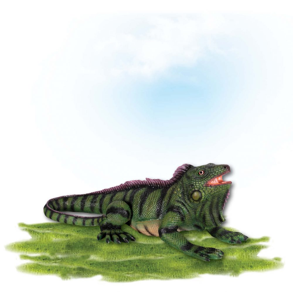 Animals Reptiles Lizards Iguana Small Product Image V px px