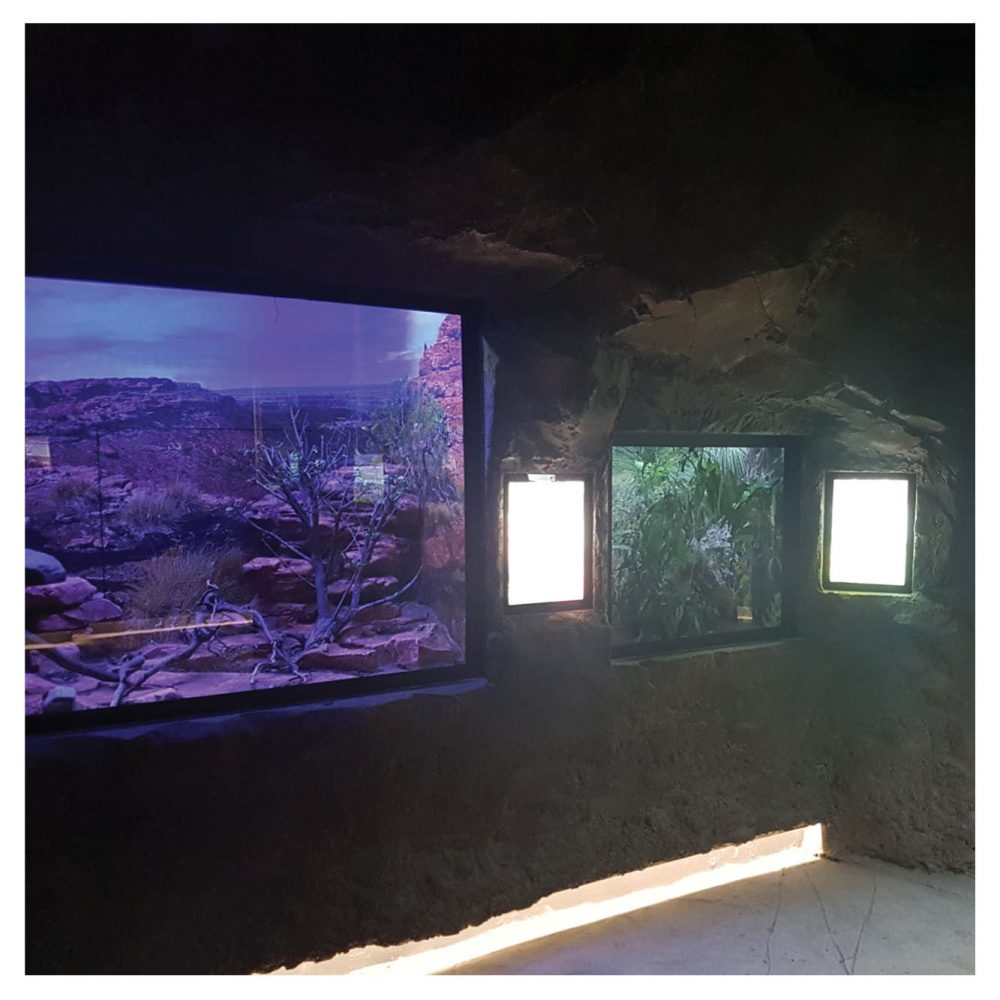Artificial Rocks Caves Gumbuya Critters Cave Inside View Product Gallery  px px