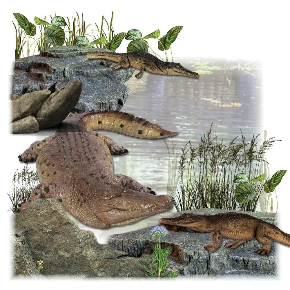 Crocodiles & Alligator