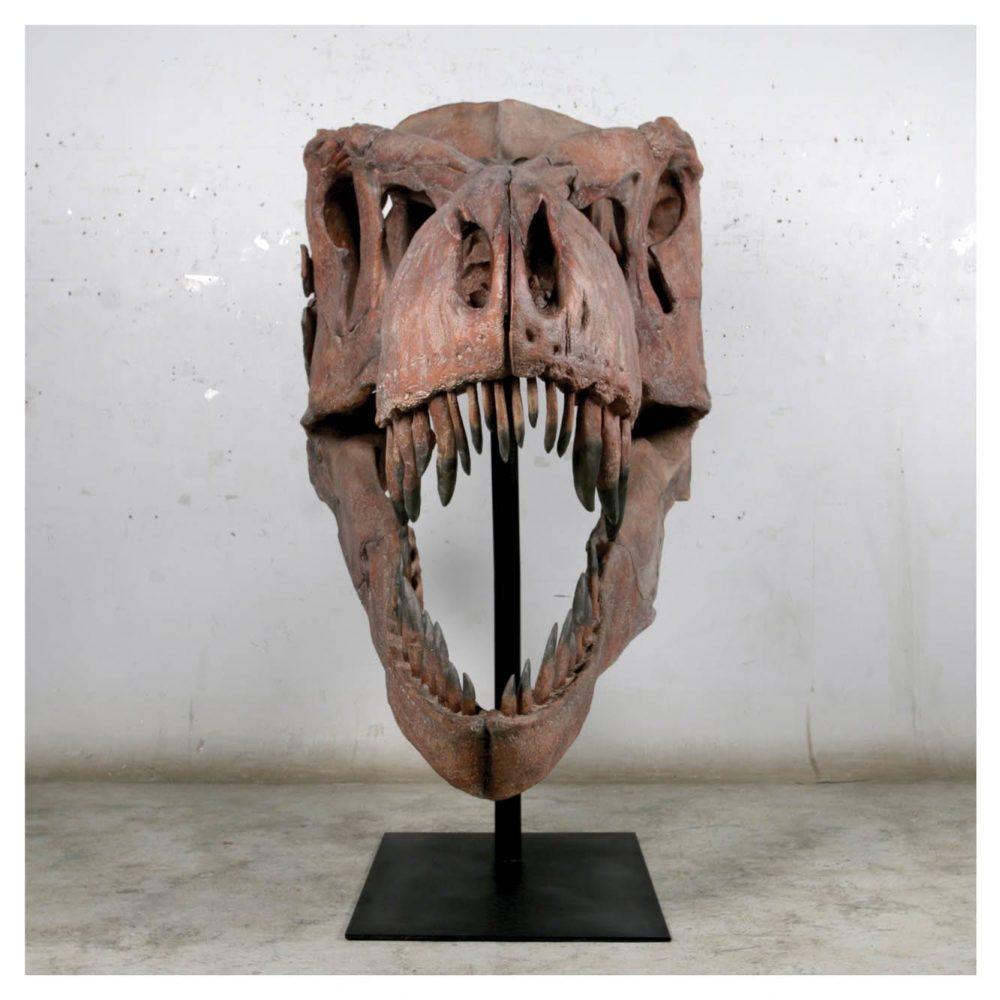 Dinosaur Prehistoric Prehistoric Fossils bones Giant T Rex Skull Product Gallery  px px