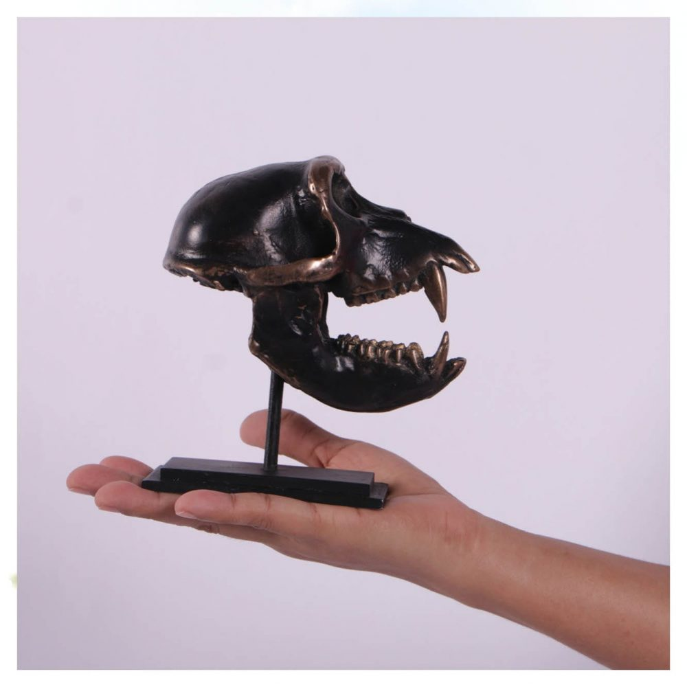 Dinosaur Prehistoric Prehistoric Fossils bones Macaque Skull on base Product Gallery  px px