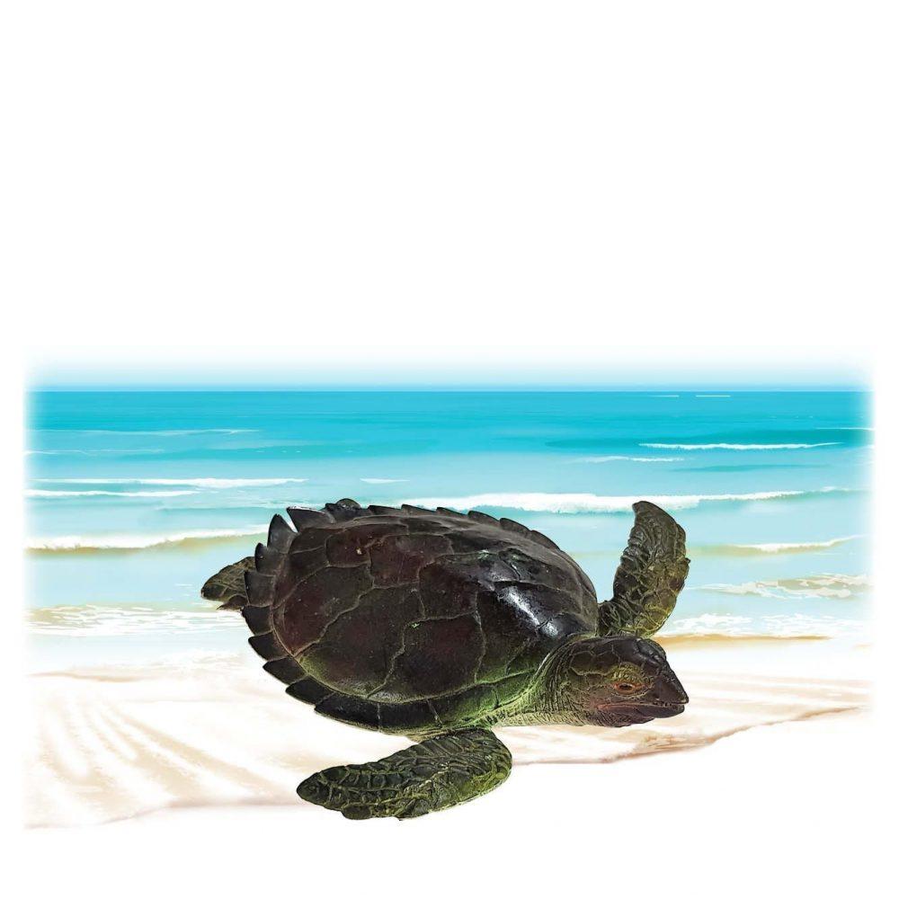 Mammals Marine Life Marine Reptiles Green Turtle Juvenile Product Image V px px