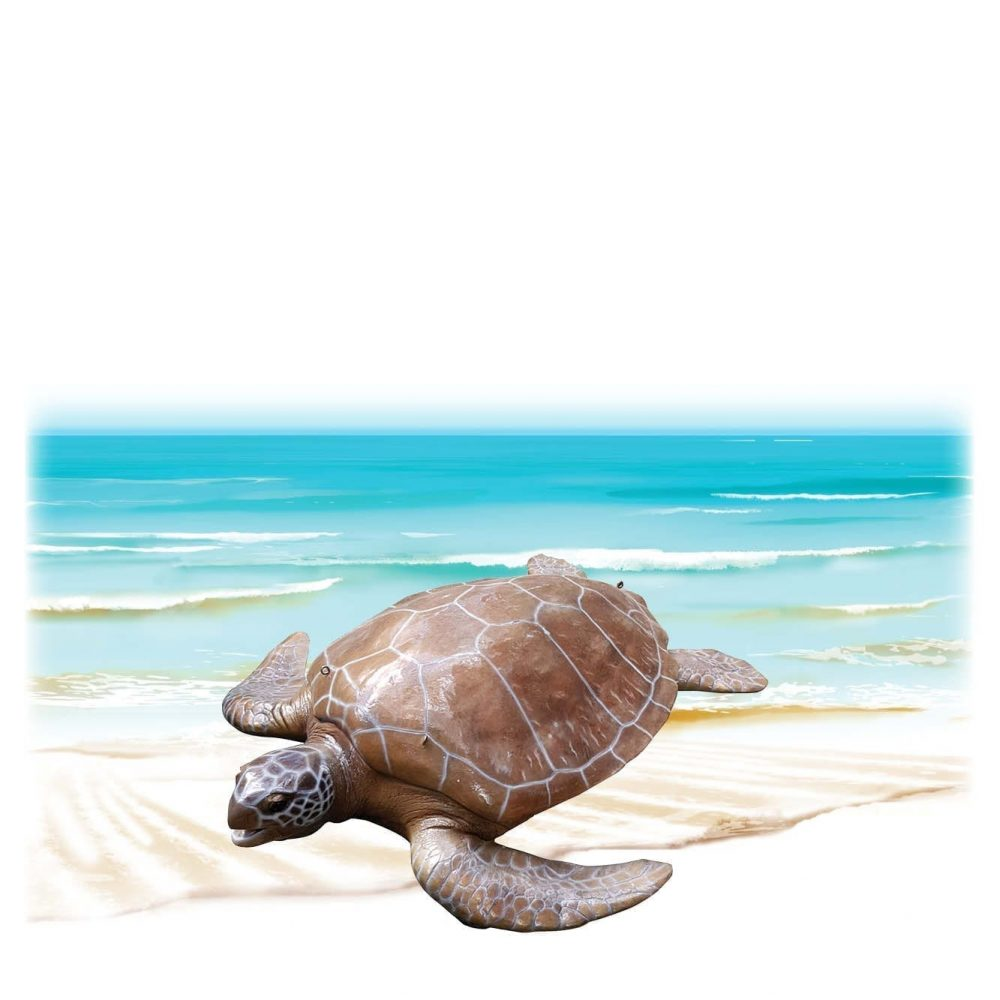 Mammals Marine Life Marine Reptiles Green Turtle Large Product Image V px px
