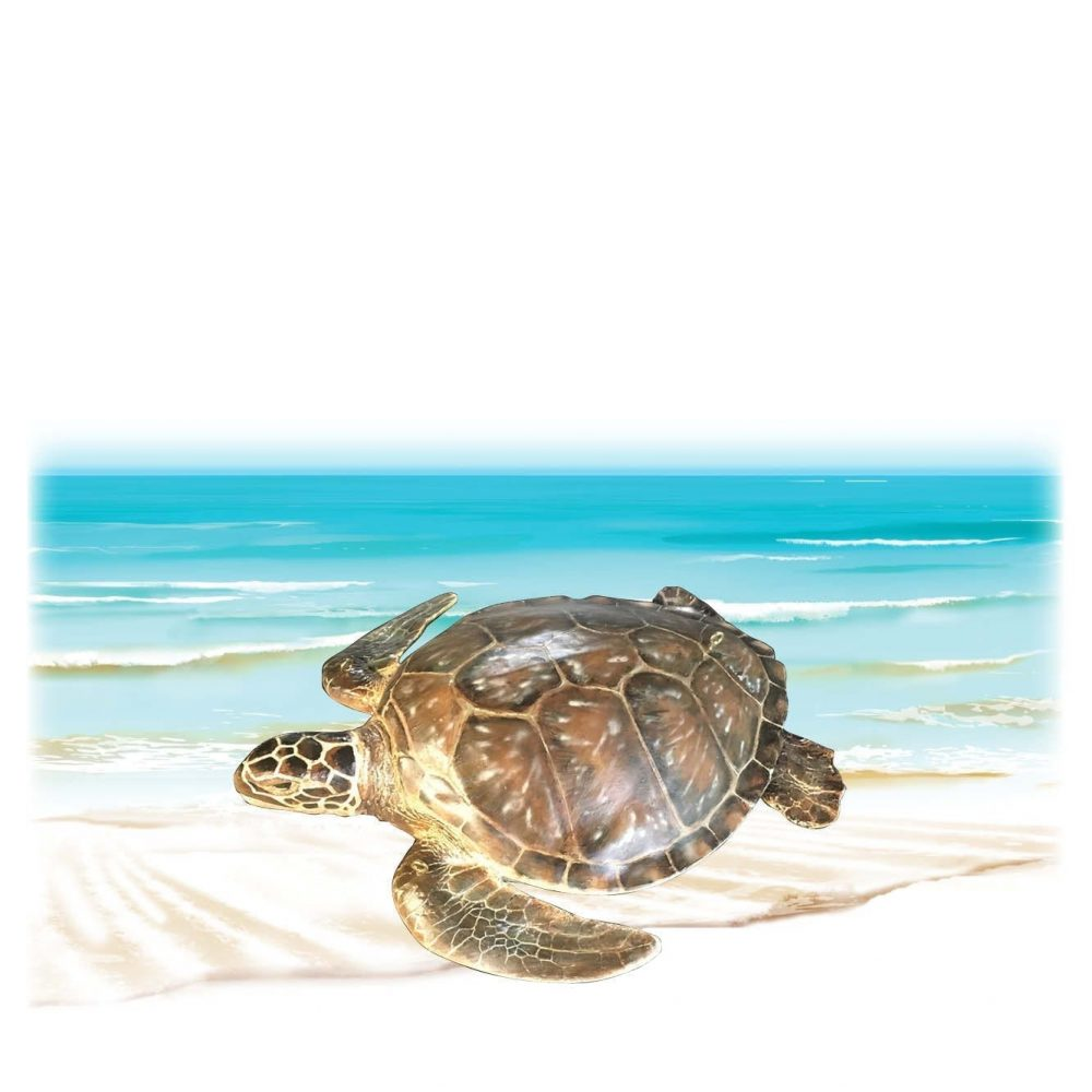 Mammals Marine Life Marine Reptiles Green Turtle Small Product Image V px px