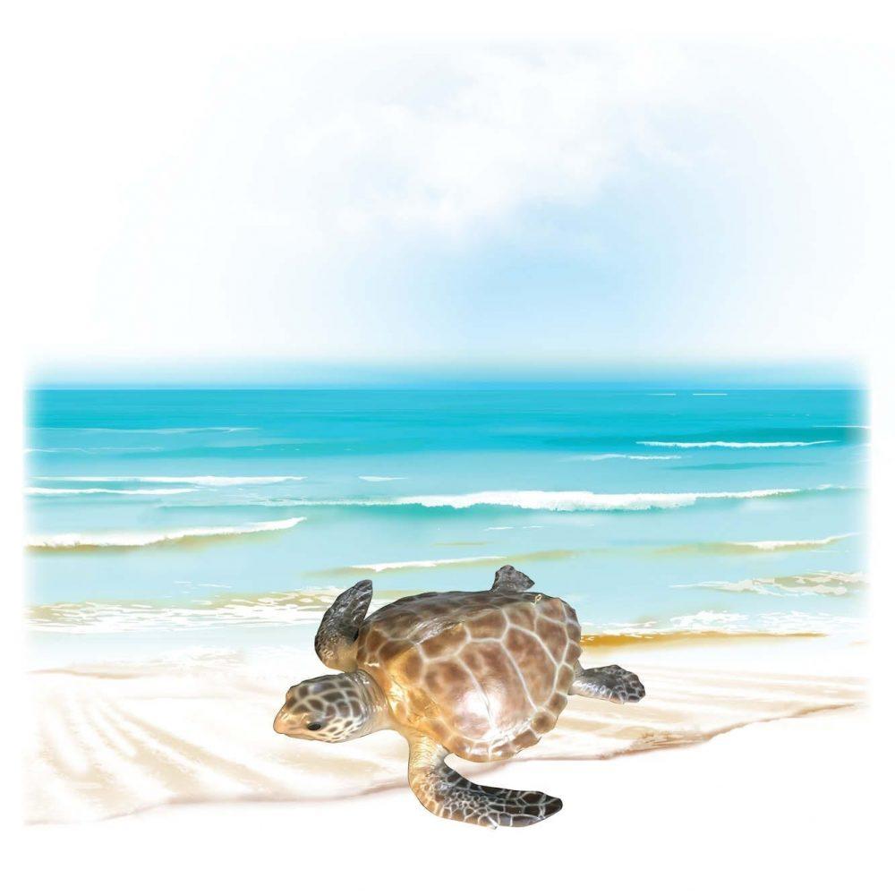 Mammals Marine Life Marine Reptiles Hawksbill Turtle Product Image V px px
