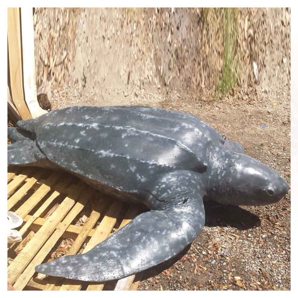 Mammals Marine Life Marine Reptiles Loggerhead Turtle Product Image V px px