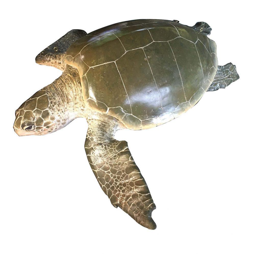 Mammals Marine Life Marine Reptiles Olive Ridley Turtle Product Image V px px