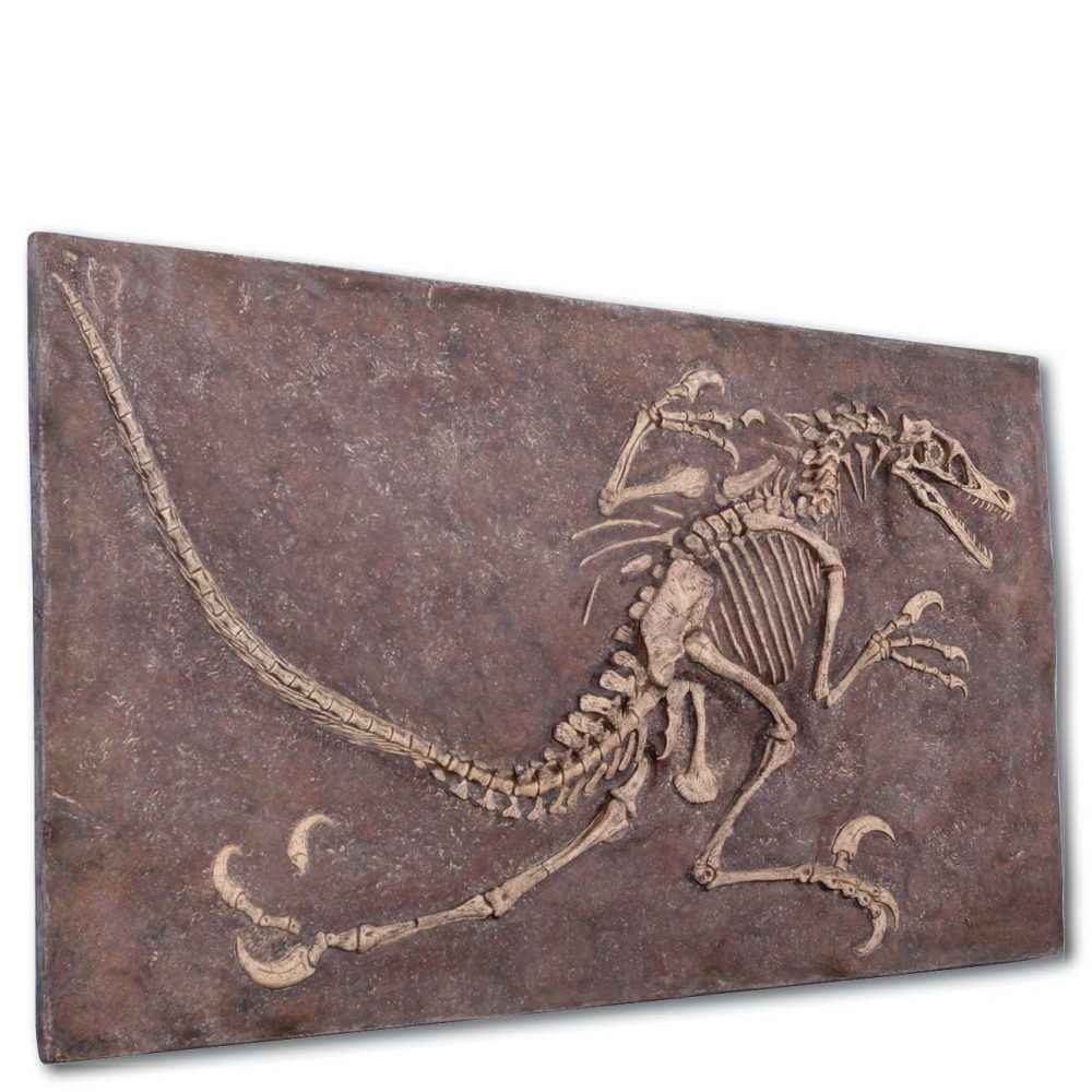 Prehistoric Dinosaur Fossil Digs Velociraptor Natural  without sides Product Image  px px