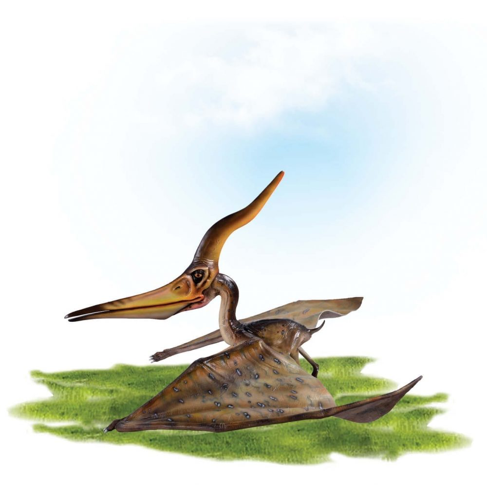 Prehistoric Dinosaur sculpture Pteranodon Ingens standing wings out Product Image V px px